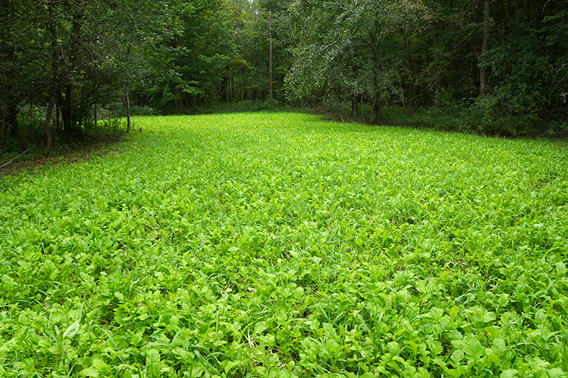 Nature Seed Food Plot Seed