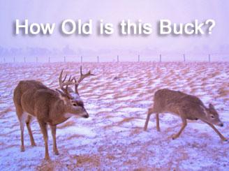 Aging deer on the hoof by deerbuilder com