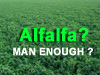 Are you MAN ENOUGH for Alfalfa?
