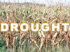 2012 Drought - Food Plot Strategies