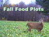 Plant your fall food plots now!