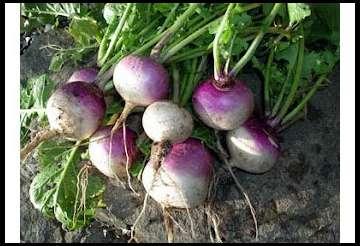 Planting Summer Food Plots By Deerbuilder Com
