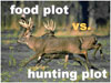 Food Plot vs. Kill Plot?