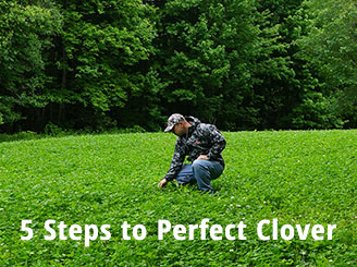 5 Steps to Perfect Clover