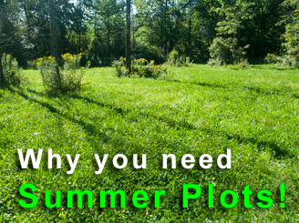 Best Summer Food Plots Whitetail Deer