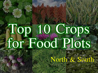 Top Ten Cream Of The Crop Food Plot Plants North And South